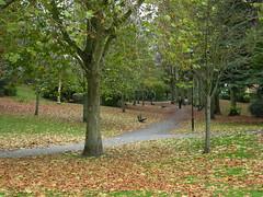 Autumns Carpet. (BIKEPILOT) Tags: autumn trees leaves carpet colours hampshire aldershot municipalgardens