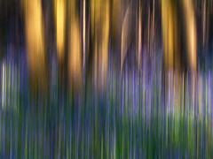 Bluebell Woods (fstop186) Tags: camera flowers blue trees light sunset abstract motion blur green art grass lines yellow vertical bluebells contrast speed gold movement woods patterns tripod surreal panasonic shade g3 streaking icm goldenhour intentional intentionalcameramovement