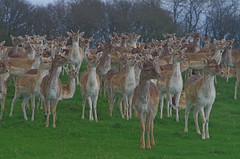 919-41L (Lozarithm) Tags: nt deer k50 dyrham x14 55300 pentaxzoom hdpda55300mmf458edwr