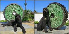 Benni discovers a new sculpture but doesn't understand it. (Bennilover, off till Feb. 13) Tags: dog beach dogs wet swimming shark machine octopus lobster laguna labradoodle cogs benni sculptures eels marinelife