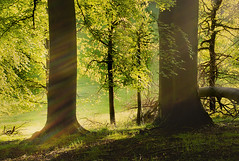 Sunlight rays (jamietaylor2127) Tags: sunlight forest spring woods estate ngc scenic sigma foliage rays 30mm