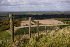 WHH-17 (liamworrall) Tags: england horse white hill oxfordshire