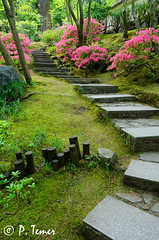 Garden Path (Sol y Luz Photography (aka love_2_see_the_world)) Tags: garden path peaceful serenity