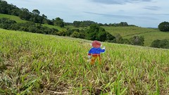 Flat Stanley in Australia (Gillian Everett) Tags: school project landscape australia explore queensland noosa 111 116 flatstanley 2016 hinterland explored