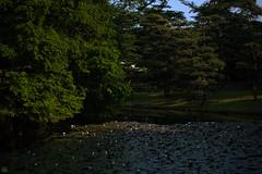 20160522-D7-DS7_2620.jpg (d3_plus) Tags: park street sky plant flower nature japan garden walking drive tokyo nikon scenery bokeh fine daily bloom   nikkor   kanagawa   dailyphoto touring     thesedays  fineday  jindaiji          d700 kanagawapref nikond700