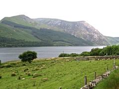 1709 Llyn Cwellyn - reservoir (Andy panomaniacanonymous) Tags: 20160606 ccc cymru gwynedd lake lll llyncwellyn northwales photostream reservoir rrr wales welshhighlandrailway