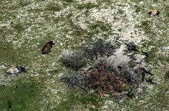 Mandacaru (felipe sahd) Tags: animals brasil animais maranho mandacaru litoralnordestino
