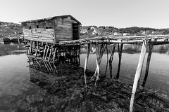 Fishing Stage (Karen_Chappell) Tags: ocean wood blackandwhite bw canada reflection water rural newfoundland wooden fishing dock scenery harbour stage shed scenic wharf nfld eastcoast atlanticcanada avalonpeninsula brigussouth