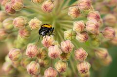 Chillin (Matt Williams Gallery) Tags: flowers flower macro nature bug garden insect spring nikon bokeh beetle raleigh bloom buds blooms naturephotography macrophotography raleigharboretum d7100 mattwilliamsphotography