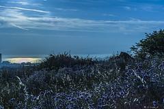 VERSO IL MARE    ---   TO THE SEA  ---   EXPLORE (cune1) Tags: flowers sunset sea sky italy panorama nature reflections landscape lights italia tramonto mare natura hills cielo luci fiori riflessi collina lazio nikond700