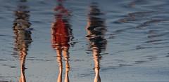 walking into the sunset  170/366 (joy feerrar) Tags: beach reflections walk