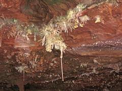 Anthodites (Skyline Caverns, Front Royal, Virginia, USA) 7 (James St. John) Tags: anthodite anthodites speleothem calcite aragonite skyline caverns virginia ordovician beekmantown group rockdale run formation front royal warren county
