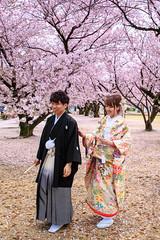 () Tags: wedding japan canon  himeji sakura  himejicastle japanesestyle       ef24105mmf4lis 1dx  yoshinosakura