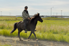 (Steini789) Tags: road horse countryside iceland riding horseback icelandic icelandichorse