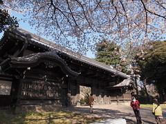 旧因州池田屋敷表門 (がじゅ) Tags: 桜 散歩 上野 門 epl2