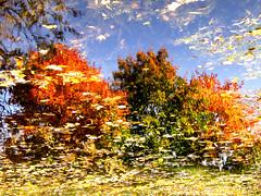Осенний пруд в Здравнево (Sadovnik Muller) Tags: olympus sp550