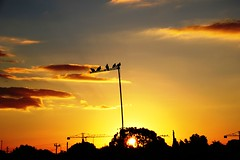 al atardecer.....! (Clic - Fany Romano 500.000, view) Tags: bird sol argentina canon atardecer ventana rojo buenos aires pajaros cielo nubes puestadesol palomas sole ocaso msm horizonte colombe sunsent rojiso orizonte nubole blinkagain bestofblinkwinners blinksuperstars rememberthatmomentlevel4 rememberthatmomentlevel1 rememberthatmomentlevel2 rememberthatmomentlevel3