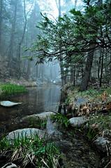 North Fork of the San Jacinto River. (charlesmonroe98) Tags: california county pine river nikon san mt riverside cove idyllwild jacinto d5000