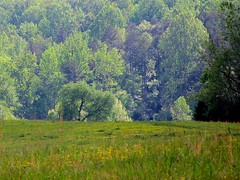 Green Leaves of Summer (Universal Pops ( Computer Died)) Tags: trees music green film home field leaves rural movie landscape virginia scenery song farm country hill growth pasture vegetation lush agriculture alamo luxuriant filmscore charlottecourthouse charlottecounty dimitritiomkin paulfranciswebster brothersfour