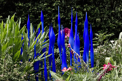 Chilhuly Exhibit - Dallas Arboretum - 2012 (Charles Davis Smith - AIA | Photographer) Tags: botanicalgardens blownglass glassart chucksmith arboretums botanicalphotography texasphotographers dallasarchitecturalphotographers charlesdavissmithphotographer dallasarchitecturalphotography texasarchitecturalphotographer texasarchitecturalphotography chilhulyexhibitdallasarboretum2012 dalechilhulyart