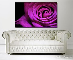 PURPLE ROSE (Canvas Art Shop) Tags: flowers art floral wallart posters prints homedecor flowerart floralprints canvasart canvasprints flowerprints flowerwallart flowercanvasprints flowercanvasart