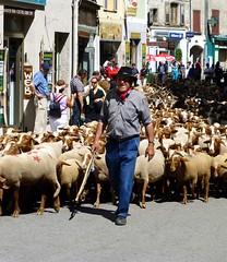 l'heure de gloire du berger (b.four) Tags: sheep shepherd flock mouton castellane dda berger pastore alpesdehauteprovence transhumance pecora coth troupeau supershot bej abigfave diamondclassphotographer flickrdiamond citrit cherryontopphotography damniwish coth5 mygearandme mygearandmepremium