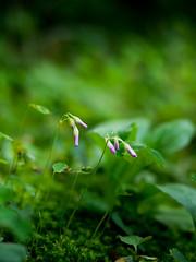 PhoTones Works #1586 (TAKUMA KIMURA) Tags: plant flower natural small bud 花 自然 植物 omd kimura takuma 琢磨 つぼみ 蕾 木村 em5 小さい photones mzd75mm