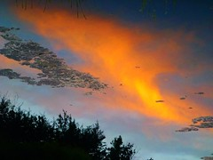 Water Art: Blazing wet sunset clouds (peggyhr) Tags: blue friends orange cloud lake canada black reflection water yellow grey niceshot diagonal alberta grasses ripples soe flipped myflickrfavs finegold thegalaxy 25faves peggyhr bluebirdestates myfriendspictures 100commentgroup dragonflyawards mygearandme reflexoreflection thenaturessoul blinkagain chariotsofartists thethreeangelslevel1blueangel thethreeangelslevel2silverangel redgroupno1 flickrstruereflection1 youthinkthisisart rolyegroupsunsets chariotsofnaturelevel1 thelooklevel1red supersixstage1~flickrbronze p1210765a