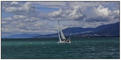 Lacustre (L. A. Garchi) Tags: sailboat lago vent wasser wind turquoise lac waters grn neighbour neuchtel segeln segelboot sustainable voilier vento karibik vecino lacustre voisin seeland neuenburgersee olien olie
