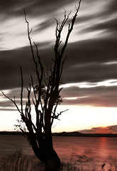 color of the colorless (Pixeled79) Tags: life light sunset red sky orange white lake black color reflection tree nature water grass silhouette yellow clouds photography long exposure alone ray wind earth horizon planet lonely simple nikond300