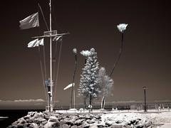 072012-16.59.47 (Pak T) Tags: california ferry ir catalina flags infrared avalon catalinaexpress sigma30mmf14