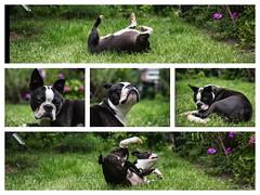 Happy Dog 27.07.2012