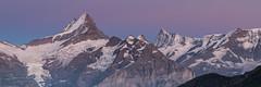 Sreckhorn et Fiescherhorn (SaGa | Photo) Tags: suisse bern grindelwald berne panoramique bachalpsee