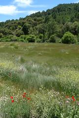 20090529_1319_1010642.jpg (m.vgunten) Tags: spain r2 castillelamancha flickr2009 batndelpuerto bikeespaa picasa2009