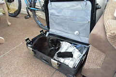 where do you think you're going? (philra08 - 1,500,000 views April 2015) Tags: cats pussy kittens moggies