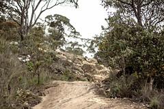Trail (losacchi) Tags: travel brazil mountain minasgerais brasil trail espiritosanto picodabandeira manhumirim altodocapao altodojequitiba