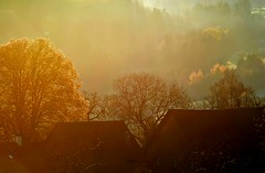 Herbstmorgen (balu51) Tags: morning november autumn trees orange fall forest sunrise switzerland nebel herbst roofs wald sonnenaufgang 2012 herbstmorgen 365d