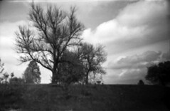 treescape (Judy M. Boyle) Tags: hanover caffenol helioflex3000t benzgant hanoverpa caffenolc kentmere400 fppedu400