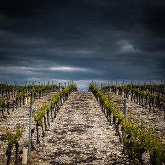Division (Kevin STRAGLIATI) Tags: light vacation sky clouds wine geometry hill ngc culture vine southern fields division grape ardeche vinyard