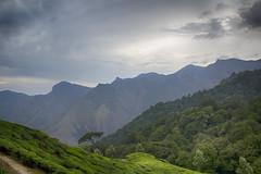 _MG_0608 (dilraj panakkal.....loves photography) Tags: travel india bike ride kerala munnar