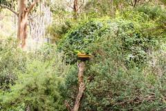 20160327-133616_AdelaideNationals2016_D7100_2198.jpg (Foster's Lightroom) Tags: birds au australia adelaide southaustralia lorikeets zoos cleland crafters clelandwildlifepark