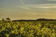 Billinge Hill Springtime (ianandbarbara.bonnell@btinternet.com) Tags: uk england rural lancashire serene sthelens springtime wigan merseyside billinge billingehill
