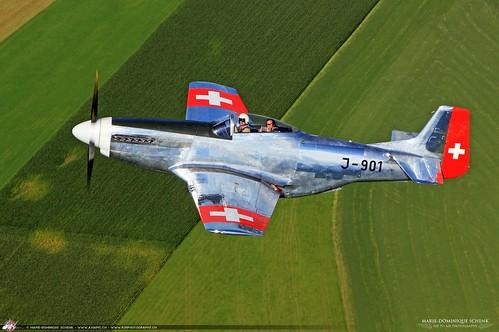 Swiss Mustang