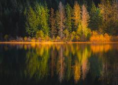Trillium lake- (Vasilic Bogdan) Tags: autumn mountains cold reflection fall nature rain oregon waterfalls leafs creeks