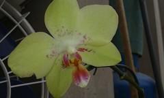 20150722_125117 - Cpia (Megaolhar) Tags: flores toy flickr do dia vale paulo apa bom inverno so campos facebook tuka jordo paraba fazendinha 2016 youtube ibama twitter jardinagem bioma gomeral