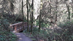 20160331_094545 (ks_bluechip) Tags: creek evans trails preserve sammamish usa2106