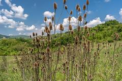 (darkoantolkovic) Tags: new travel flowers naturaleza flower nature nikon croatia natura priroda hrvatska