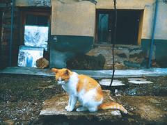Cats Edition 7 - (12) (Robert Krstevski) Tags: door pet cats pets cute window animal animals cat photography kitten outdoor kitty kittens kitties cuteness photooftheday catsphotography robertkrstevski robertkrstevskiblogspotcom