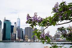 Springtime in the city (kzoop) Tags: nyc newyorkcity flowers newyork tree water skyline river kayak cityscape eastriver wtc gothamist springtime brooklynbridgepark sonya6000
