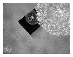 Shadows and Reflections (Markus Jork) Tags: blackandwhite bw reflection film lamp shadows instant graflex maskros supergraphic polaroid664 angulon90mm